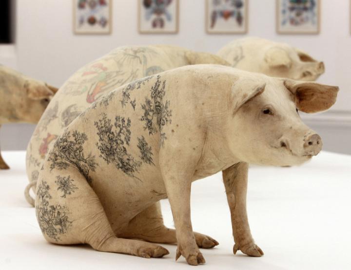 Beauté et Toc. De l'art ou du cochon ?