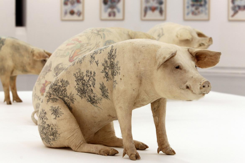 Wim Delvoye Cochon tatoué