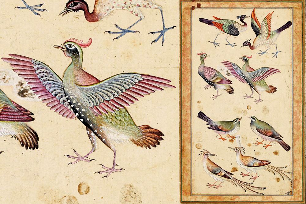 """""""Le Cantique des oiseaux"""" d'Attar - Huit oiseaux"""