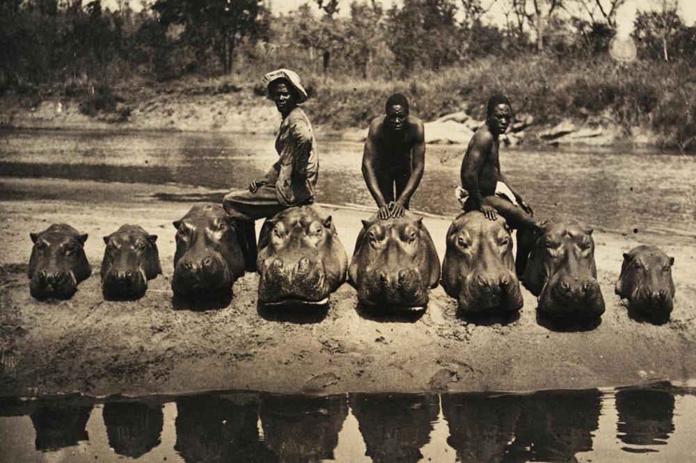 """""""Massacre d'hippopotames"""" © Archives Nationales)"""