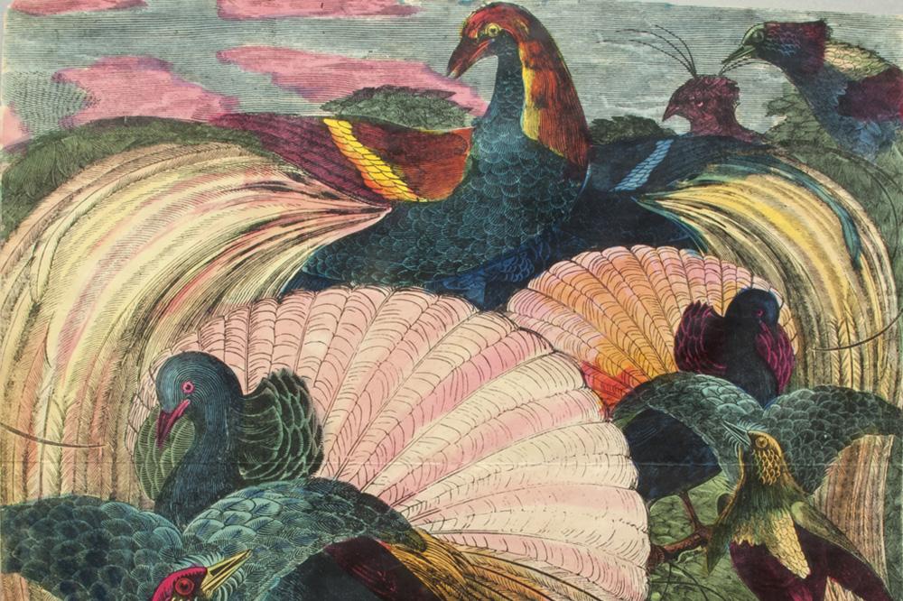 8. Piero Fornasetti, « Uccelli », épreuve d'impression, couleur sur papier, projet pour un foulard de soie, 1950